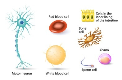 Different Human Cell Types
