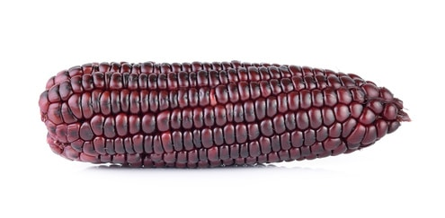purple corn on white background