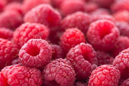 Ripe red raspberries.